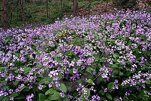 Violet Flower Stock Image - Image: 7967021
