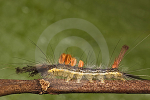 Caterpillar Side View Macro Royalty Free Stock Photo - Image: 7971265