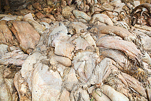 Raw Skins At Tannery Royalty Free Stock Image - Image: 7976586