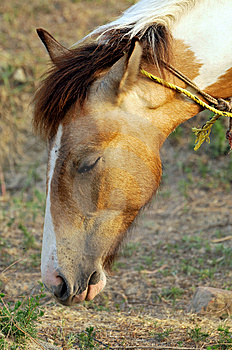 Horse Face Royalty Free Stock Photography - Image: 7979337