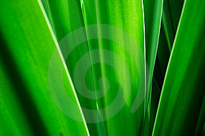 Leaf Royalty Free Stock Image - Image: 7979516