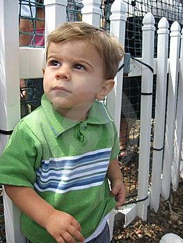 White Picket Fence Stock Images - Image: 7979784