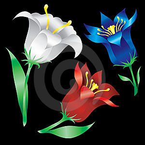 Beautiful Lilies Flowers Royalty Free Stock Images - Image: 7988409