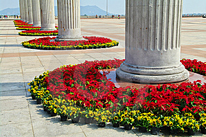 Flowers In Century Plaza Stock Photography - Image: 7990752