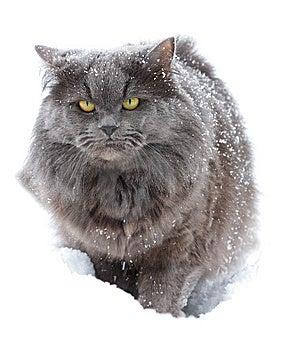 Cat Royalty Free Stock Photos - Image: 7991548