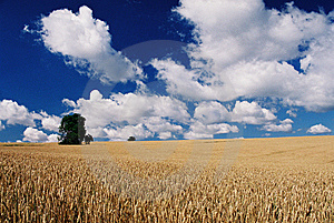Field 2 Stock Photo - Image: 7991550
