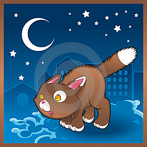 Baby Cat In The Night Royalty Free Stock Photo - Image: 7998775