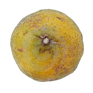 Ugli Fruit Also Called Uniq Fruit Free Stock Image