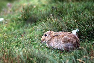 Rabbit Free Stock Photo