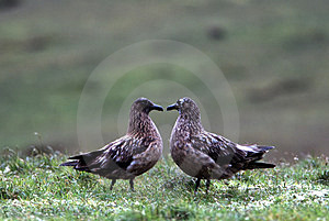 Bird Couple Stock Photos