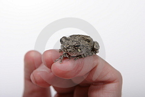 Frog 2 Stock Photo