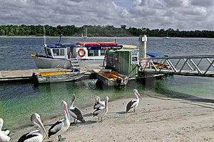 Dolphin Cruise Stock Image