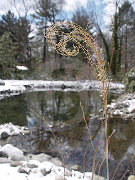 Curled Winter Grass Free Stock Photo