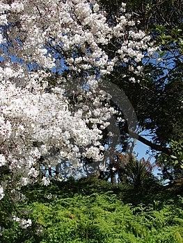 Цветения Стоковая Фотография