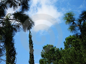 Trees and skies Royalty Free Stock Photo