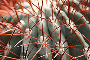 Cactus Free Stock Images