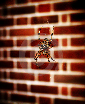 Spider On Web 3 Free Stock Photos