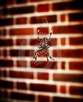 Spider On Web 3 Free Stock Photos