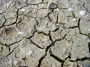 Cracked Mud With Shells Stock Image