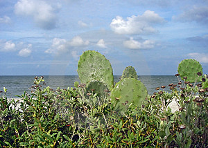 Oceanview Cacti Free Stock Photo
