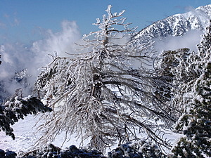 Ice Tree Stock Photo