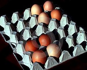 Eggtime Fotografía de archivo