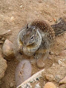 Squirrel Free Stock Photos