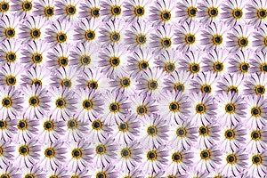Flower Pattern Free Stock Photos