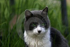 Grüne Augen Lizenzfreie Stockfotografie