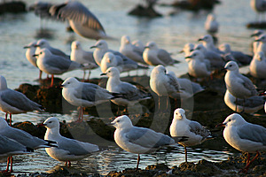 Seaguls Stock Photo