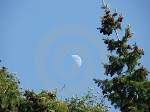 Moon Between Trees Stock Photography