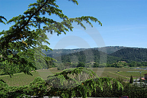 Nappa Vineyard Free Stock Images