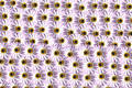 Flower pattern Free Stock Photos