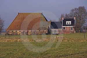 Frisian Head-neck-body Farm Stock Image - Image: 8006901