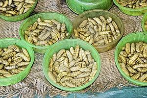 Edible Larvae Stock Image - Image: 8019671