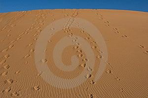 Feet Running In The Desert Stock Image - Image: 8031311