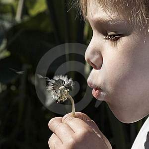 A Boy In The Garden Stock Images - Image: 8032444