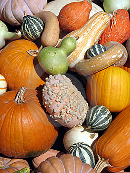 Harvest Stock Photo - Image: 8032910