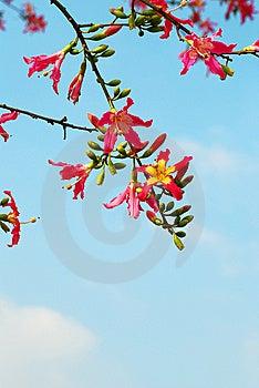 Different Kapok Royalty Free Stock Image - Image: 8034166