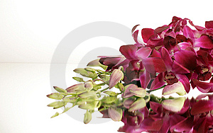Violet Orchids Stock Image - Image: 8035331
