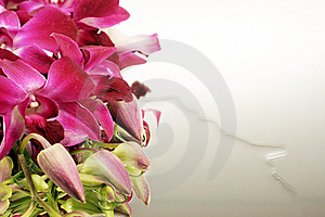 Violet Orchids Stock Image - Image: 8035491