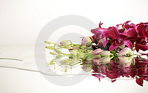 Violet Orchids Stock Images - Image: 8035524