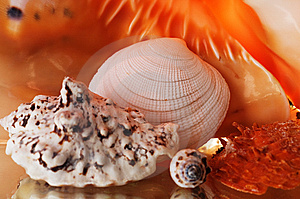 Sea Cockleshells. Stock Photo - Image: 8036510