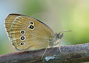 A Butterfly Stock Images - Image: 8042244