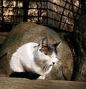 Katze Genießen Sonnenschein Stockfotografie - Bild: 8056222