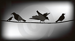 Birds On Wires Royalty Free Stock Images - Image: 8056579