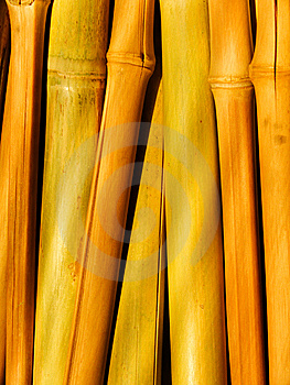 Stalk Of A Plant A Bamboo Royalty Free Stock Images - Image: 8058169