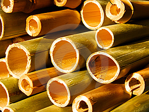 Stalk Of A Plant A Bamboo Stock Photo - Image: 8058190