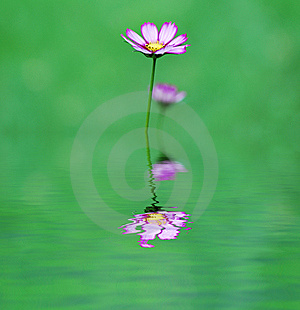 Violet Flower Royalty Free Stock Photography - Image: 8058407