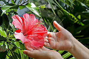 Red Flower Stock Photography - Image: 8061632